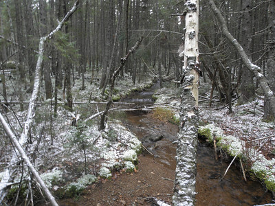 Shoal Pond Brook off the trail