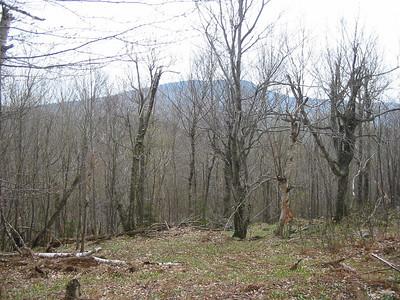 More birch groves