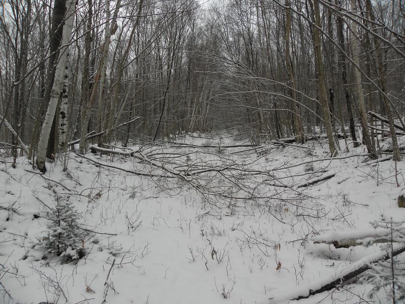 The logging road we followed