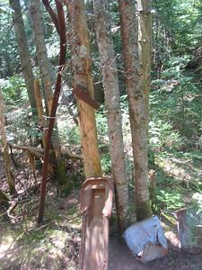 Logging camp remains