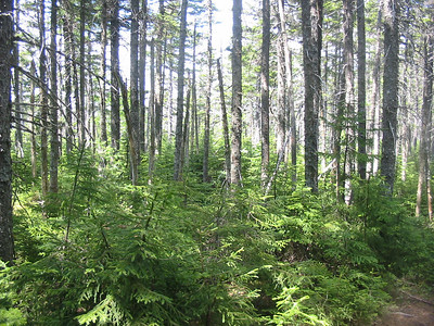 Nice looking woods
