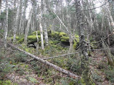 Beginning of the moss
