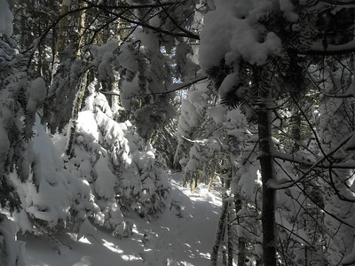 Mt. Tecumseh trail after the split