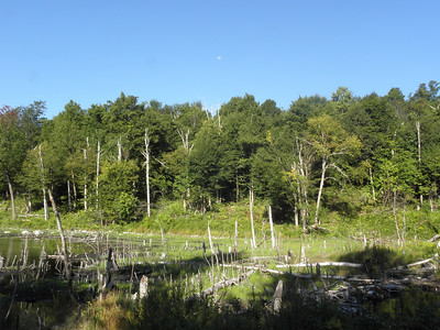 Another view of the beaver pond