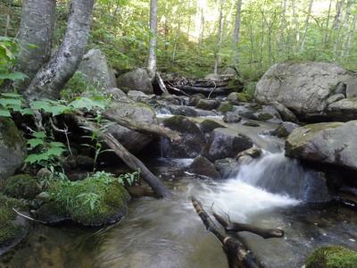 Unknown Pond brook