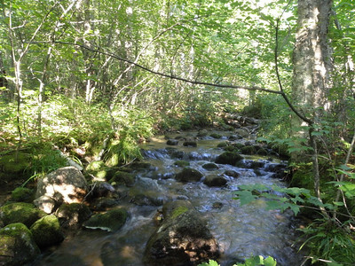 Ripples on Unknown Pond brook