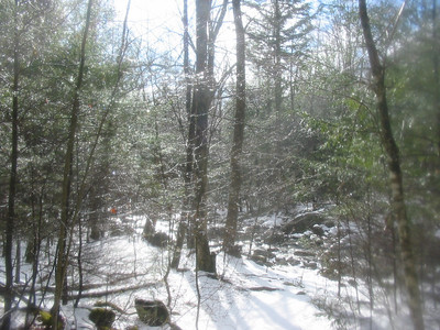 Snow melting off the trees
