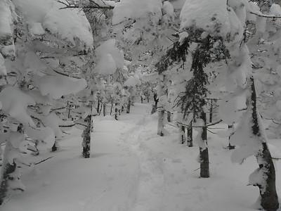 Winter wonderland, yay