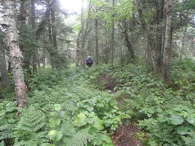 Great moose path on the ridge