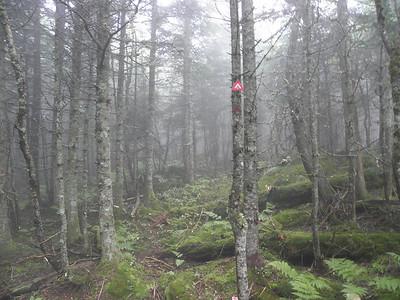 Looks like a great trail