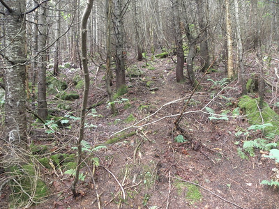 Took a wrong branch at 2800 feet, it ended but a herd path led up