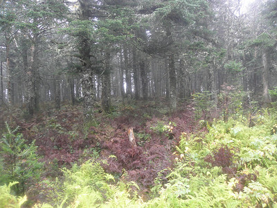 Awesome woods near the summit