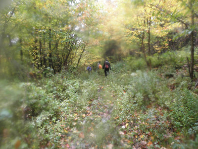 We find the logging road