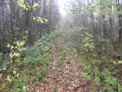 Blue logging road