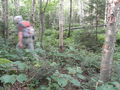Open woods for the start of the whack, Joe's just a blur