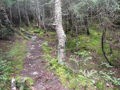 I love mossy woods