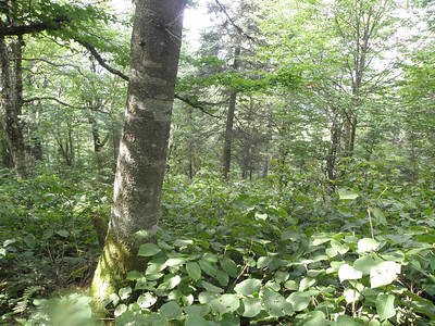 Beautiful woods here