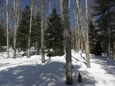 Wide open woods