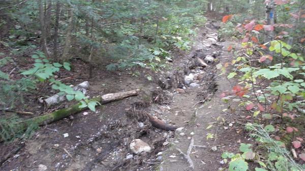 19 Mile Brook Trail hurricane damage