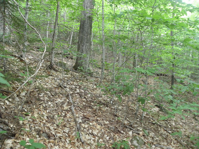 Typical woods up to 2800'