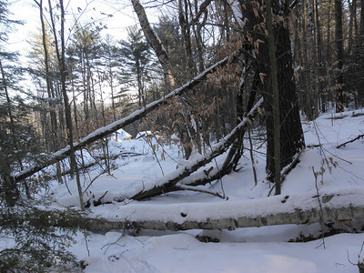 Some loser landowner leaves a blowdown mess