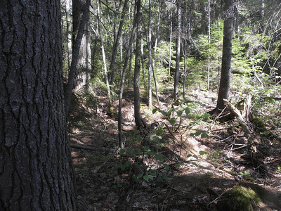 Typical woods, open in spots, patches of closed in stuff