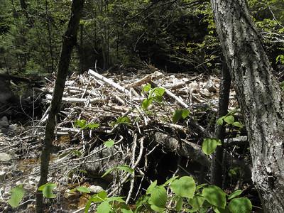 Big log jam in the stream
