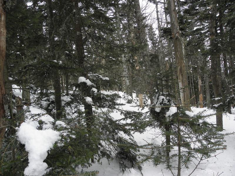 Great open woods
