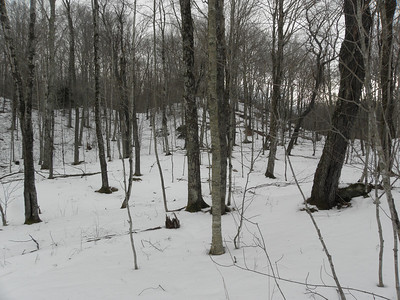 Nice hardwoods