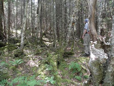 Good woods high up