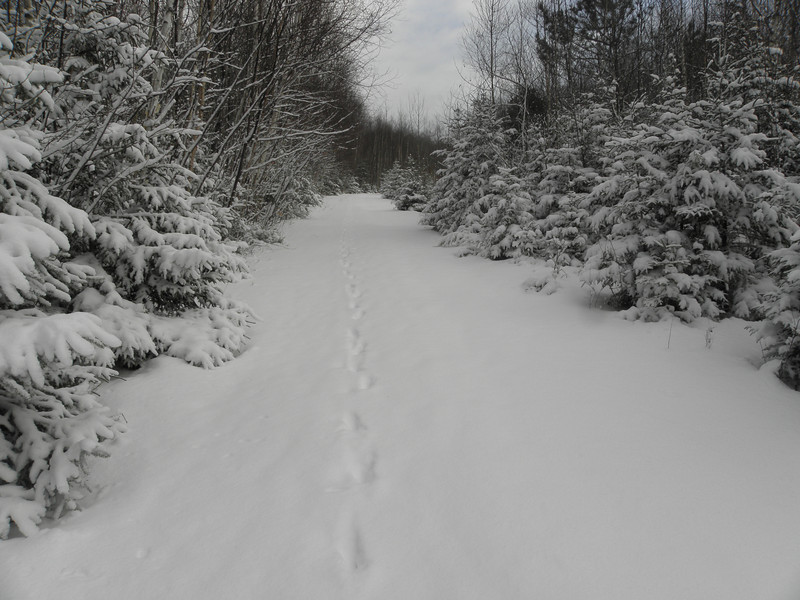 Following the dog tracks up the road