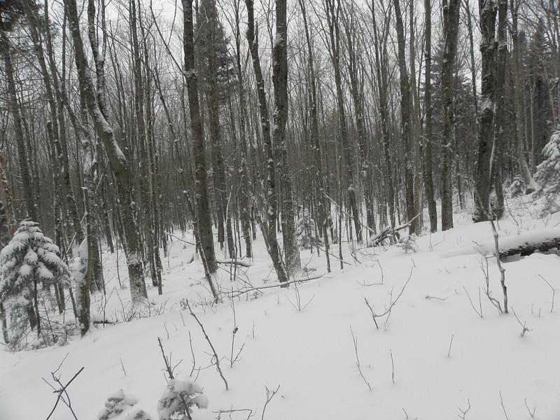 Beautiful open woods