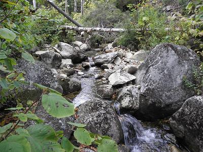 Stream in the ravine