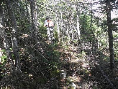 Finding a herd path near 3300'