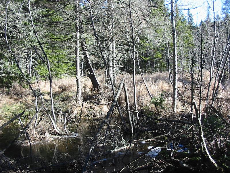 A little swampy area