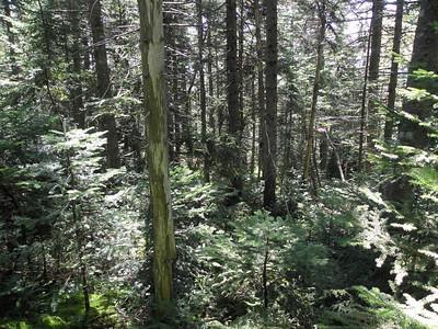 Woo hoo, following the good woods