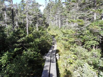Nice stretch of bog bridging