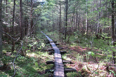Only a small portion of the longest bog bridging I've ever seen on the Basin Trail