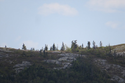 I thought these were people below S  Baldface, just trees