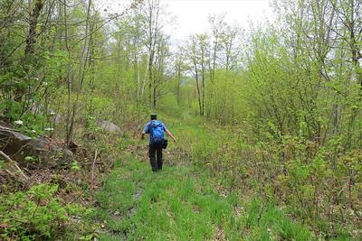 Greg finds a logging road