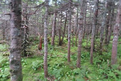 Nice woods!