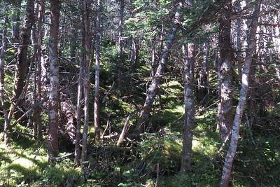 Woods below south peak, hmmmm