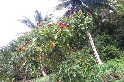 Puffy ball flower tree ;-)