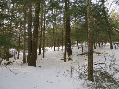Cross Minks Trail