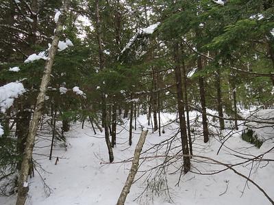 Not so fine woods