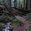 Sulphur Mountain trail