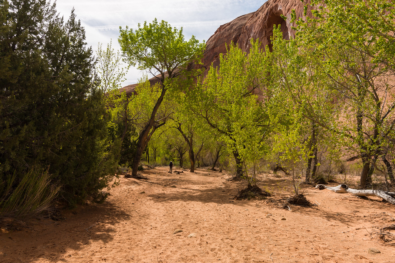 Strolling through the trees in Upper Coyote Gulch