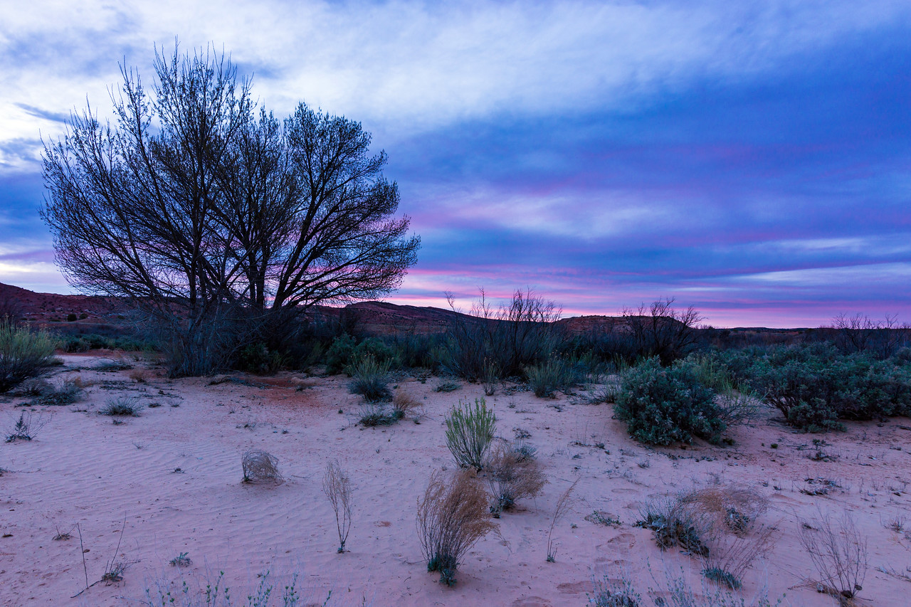 A nice, soothing, purple streaked sky greeted us at the Harris Wash trailhead upon our return to the car.  A perfect end to the long, fulfilling day.