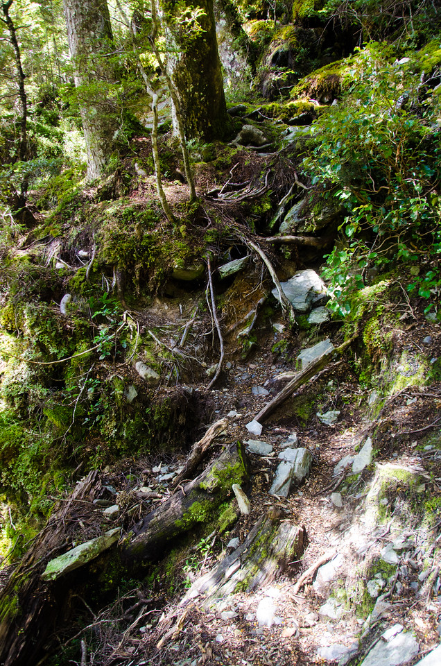 A section of trail on the way down to the Rockburn Track.  I found that aside from Great Walks and more tourist oriented tramping routes, tracks in New Zealand were not easy to walk or easy to follow.  Root ladders, washouts, deadfall, and general sliminess all made for slower going than anticipated.