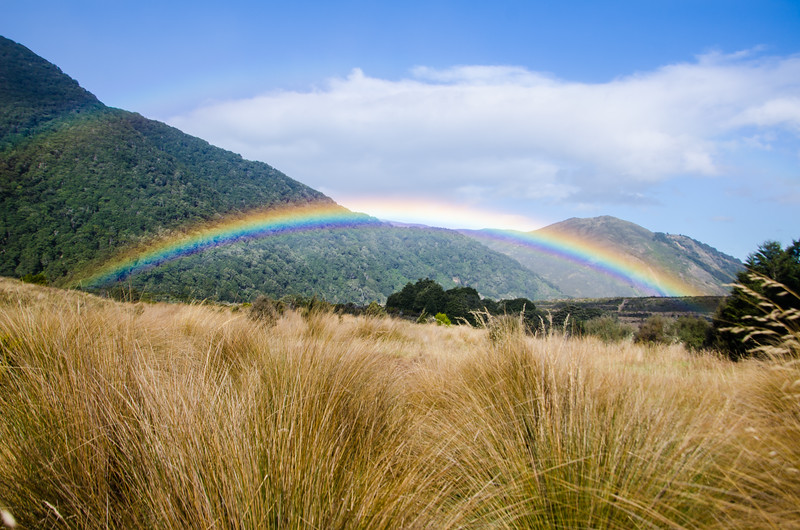 Rainbows and golden tussock